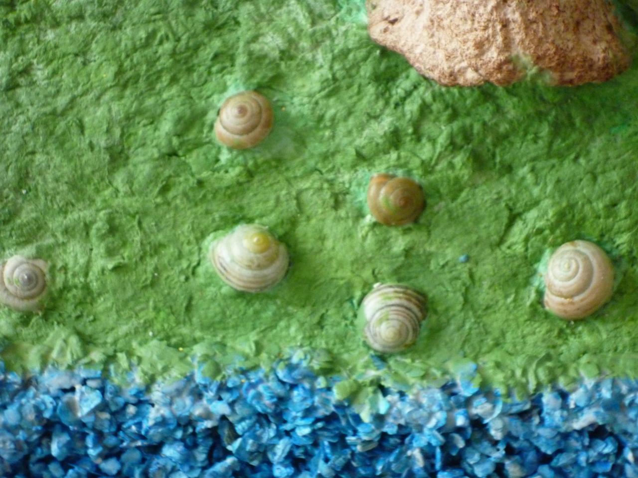 Petites coquilles d'escargots incrustées dans la nature végétale