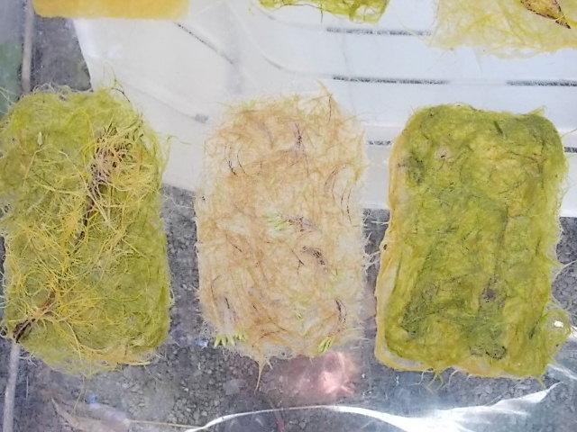 Feuilles de papier végétal 3