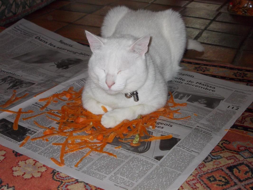 Nuage sur des fanes de carottes !
