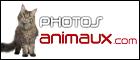 Photos-Animaux