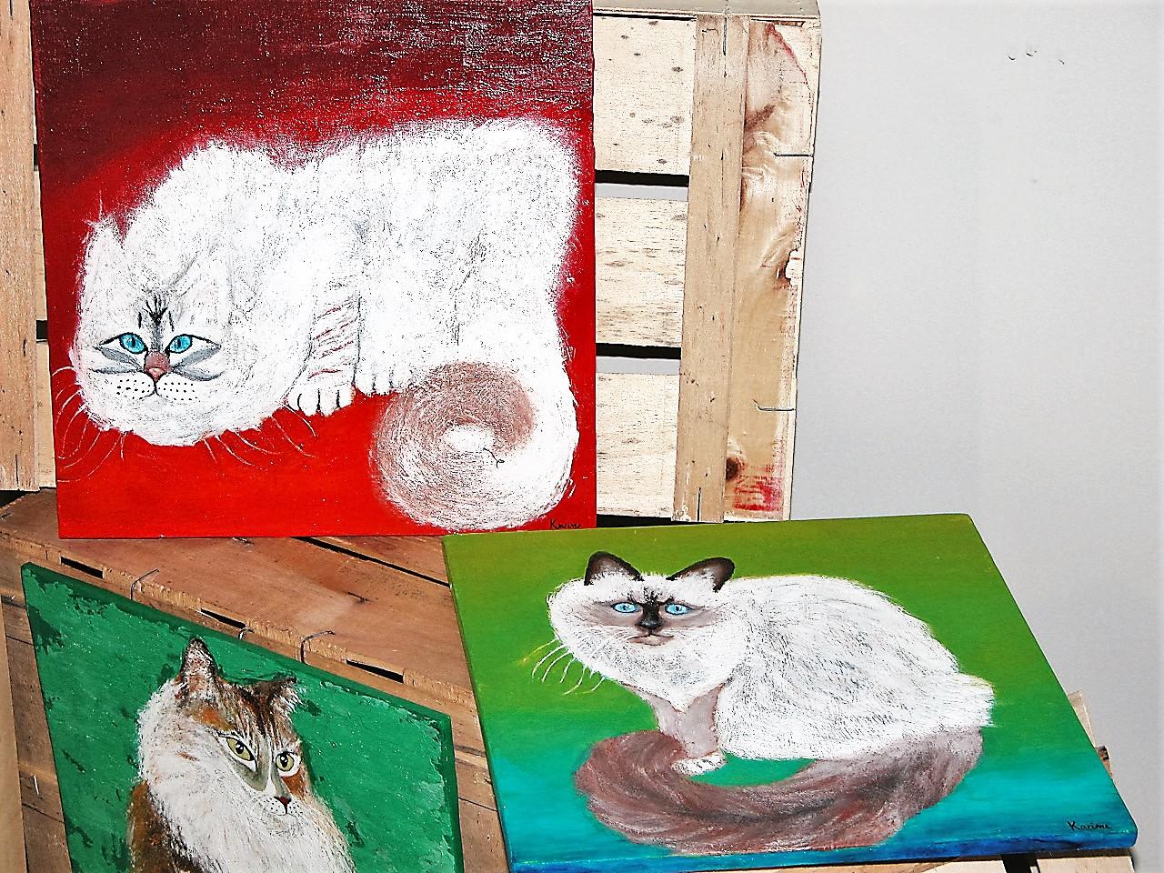 Chats birmans sur cagettes